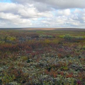 В сибирской тундре возможен массовый притокнаселения